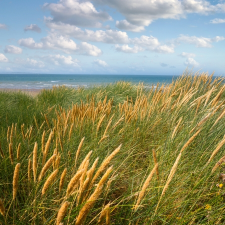 north holland: Dunes to the sea. Seascape. Stock Photo
