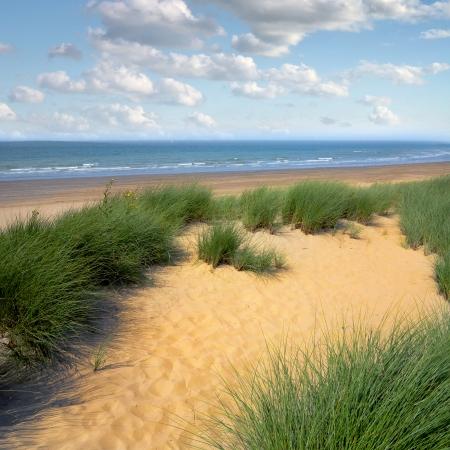 sea grass: Dunes to the sea. Seascape. Stock Photo