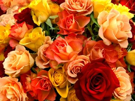 Een boeket van veelkleurige rozen. Bloemenpatroon.