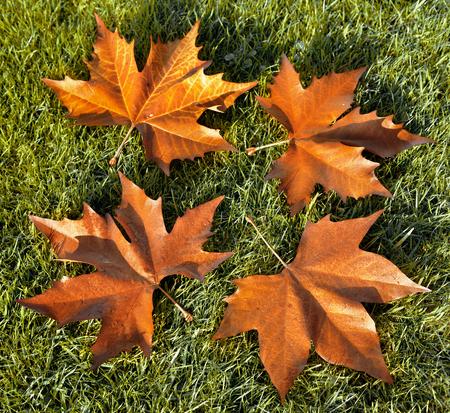 autumn leaves. Autumn landscape. photo