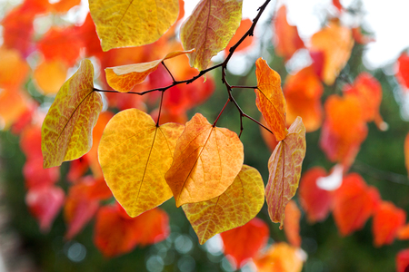 changing seasons: Tree branch with autumn leaves.
