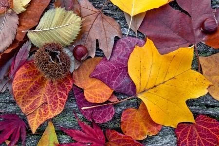 Samenvatting van de herfst bladeren. Stockfoto
