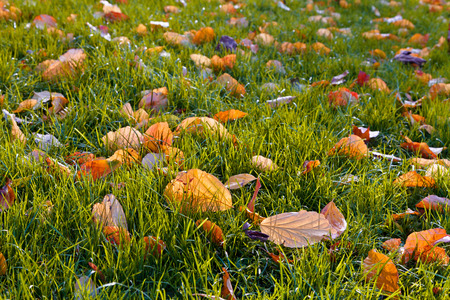 Background of autumn leaves. Abstract background. Autumn landscape. photo