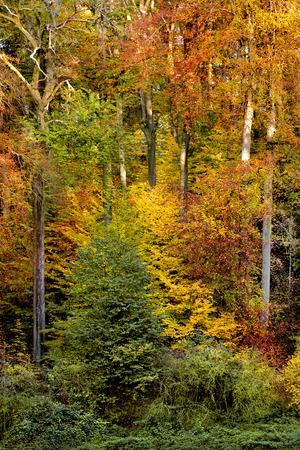 Beautiful autumn trees. Abstract background. Autumn landscape. photo