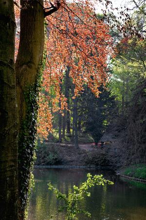 crimson: Beautiful spring garden. The lake in the park.