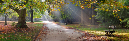 autumn path: Path in the autumn park. Autumn Landscape. Park in Autumn. Panorama. Stock Photo