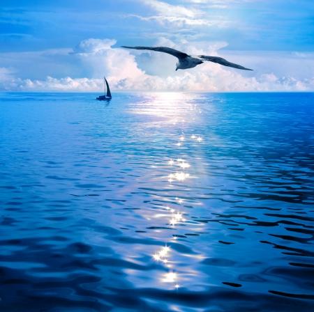 gaviota: Amanecer bajo las velas. Vistas al mar. Mar infinito, horizonte infinito, los únicos puntos de vista visibles a bordo de yates de vela.
