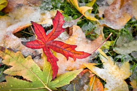 Abstract background of autumn leaves. Autumn background. The first snow. Stock Photo - 23525524