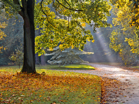 autumn path: Path in the autumn park. Autumn Landscape. Park in Autumn.
