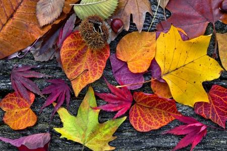 秋の抽象的な背景を残します。秋の背景。