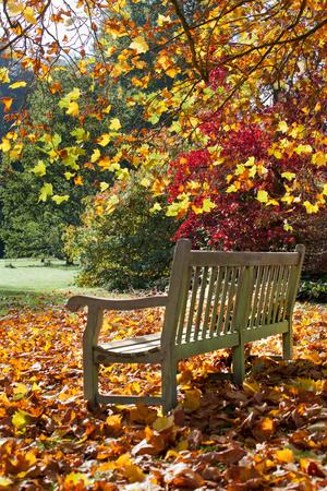 banc de parc: Banc de parc en automne. Paysage d'automne.
