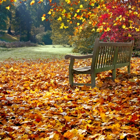 Bench in autumn park. Autumn landscape.