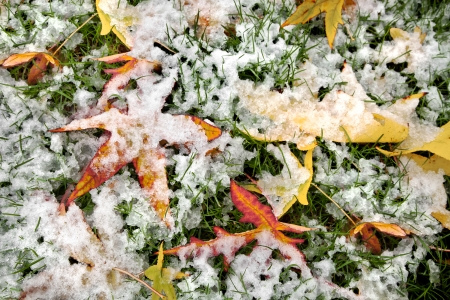 Abstract background of autumn leaves. Autumn background. The first snow. Stock Photo - 23511200