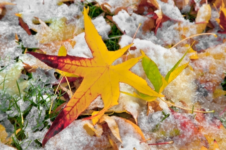 Abstract background of autumn leaves. Autumn background. The first snow. Stock Photo - 23511201