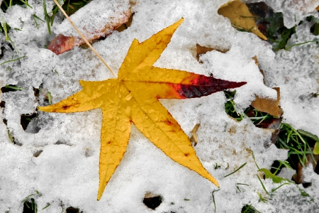 Abstract background of autumn leaves. Autumn background. The first snow. Stock Photo - 23511184