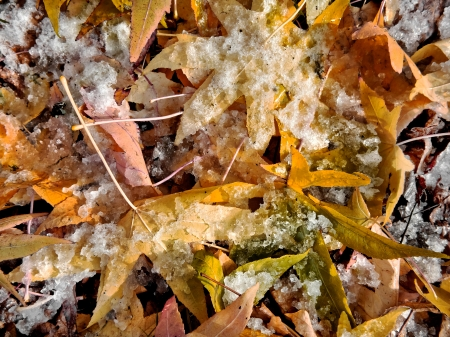 Abstract background of autumn leaves. Autumn background. The first snow. Stock Photo - 23512367