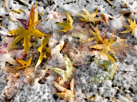 Abstract background of autumn leaves. Autumn background. The first snow. Stock Photo - 23512375