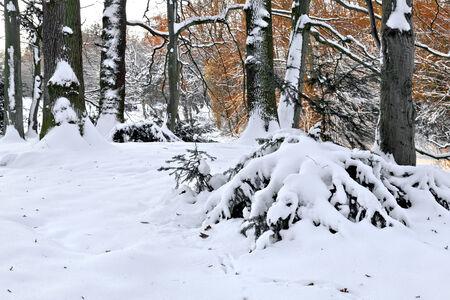 Walking in a winter park. Winter landscape. Stock Photo - 23512614