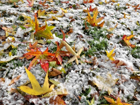 Abstract background of autumn leaves. Autumn background. The first snow. Stock Photo - 23512677