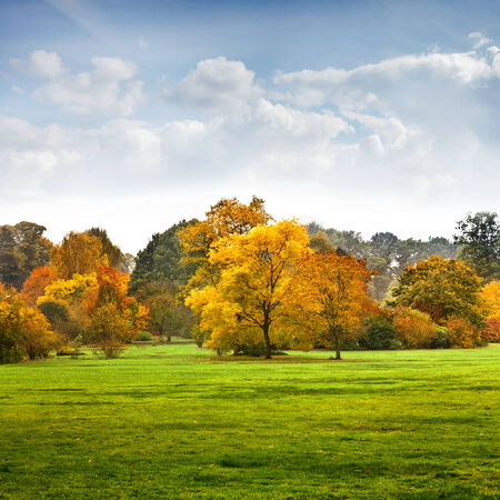 maple tree: The bright colors of autumn trees. Autumn landscape.