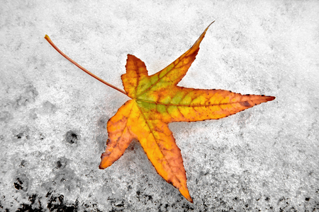 Abstract background of autumn leaves. Autumn background. The first snow. Stock Photo - 23512865