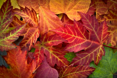 Abstract background of autumn leaves. Autumn background. Stock Photo - 23512874