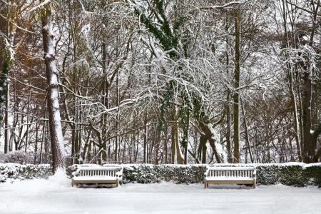 Winter Park. Bench and spruce trees covered with snow. Winter landscape. photo