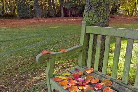 garden bench: Bench in autumn park. Autumn landscape.