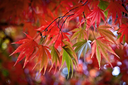 Abstract background of autumn leaves. Autumn background. Stock Photo - 23722519