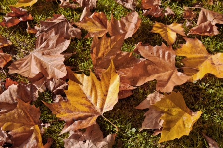 Abstract background of autumn leaves. Autumn background. Stock Photo - 23722760