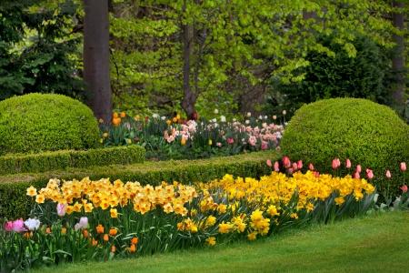 jardines con flores: Tulipanes y narcisos en el parque. Paisaje de primavera. Foto de archivo