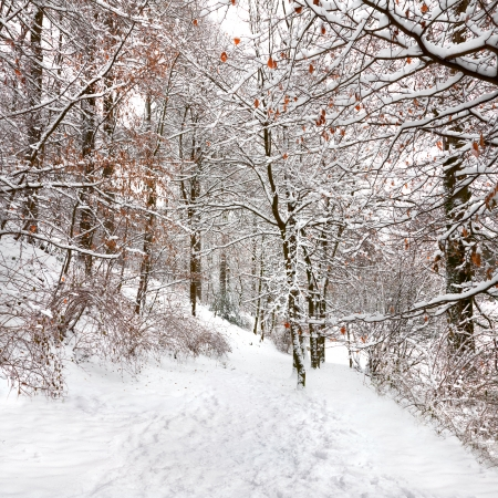 Winter Forest. Winter landscape. photo