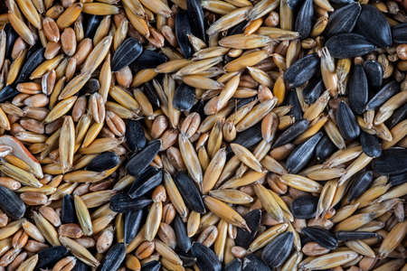 Close-up of seed mixture as winter bird food for garden birds containing black oil sunflower seeds and cereal grains
