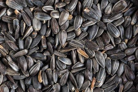 Close-up of black oil sunflower seeds in hulls as winter bird food for garden birds