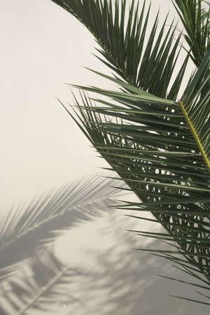 Palmtakken werpen schaduwen op een witte gewassen muur