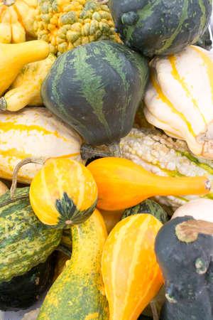 autumn arrangement: Squashes - Cucurbita - in yellow and green in an autumn arrangement  Stock Photo