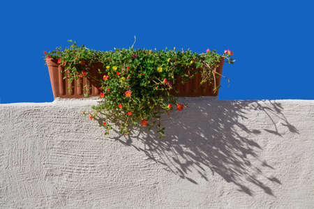 whitewashed: Terracotta flower pot on white-washed wall and blue sky