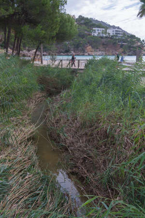 sweetwater: Reedbed of Camp de Mar, a typical humid coast-field with water coming from at least two sources  the Torrent de s