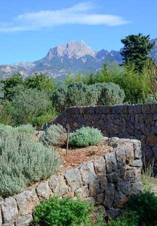 drystone: Garden with herbs on terrasses built in traditional drystone design in Soller, Majorca, October  Stock Photo