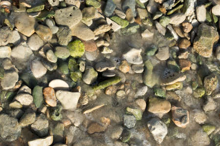 Green pebble rocks and seashells on a beach, possibly epidote, a common metamorphic mineral or a product of hydrothermal alteration of various minerals  photo
