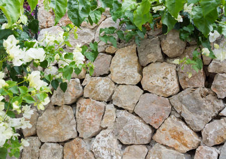 Stone wall and white flowers bougainvillea, Majorca, Spain
