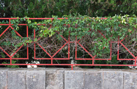 clinging: Clinging green plant on red fence on stone base  Stock Photo