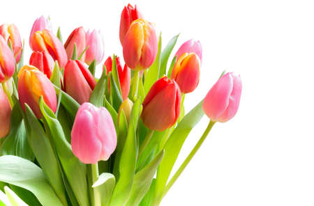 Spring tulips in a bouquet with pink, red and yellow flowers isolated on white. photo