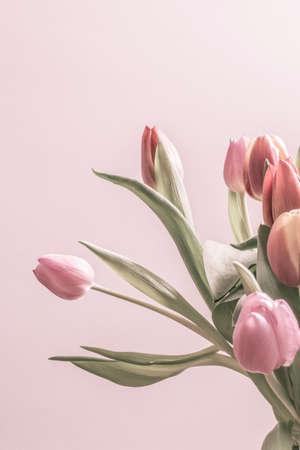 Group of vintage tulips in soft pink color  Vertical image with copy space  photo