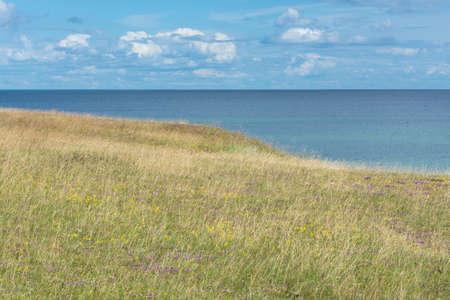 herbs wild: Heath por el mar Heath con hierbas silvestres cerca de la costa del mar B�ltico en �sterlen, Suecia del Sur Foto de archivo