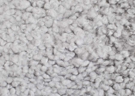 sheep skin: Gray wool background. Sheep skin closeup. Stock Photo