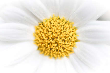 centered: Daisy abstract background with yellow centered circle, macro image, fading to white outwards.