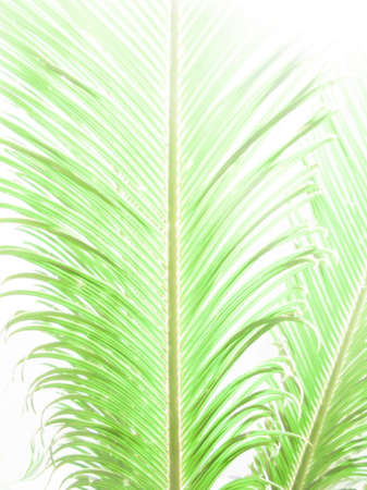 bougainvillea: Palm leaf abstract in vertical format, digital painting. Stock Photo