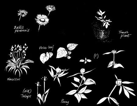 paeony: Plants on black, tomato plant, narcissus, paeonies, original watercolor sketch, isolated on black with text.
