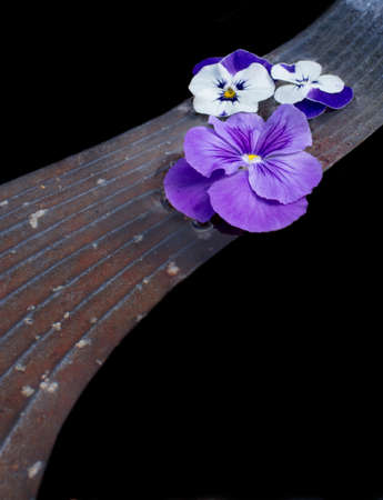 Pansy flowers on stone bridge, abstract composition, isolated on black. photo